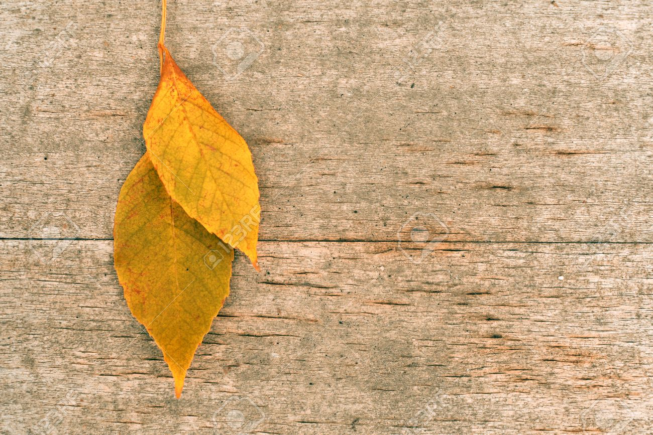 dry autumn leaf on a vintage wooden background fall background