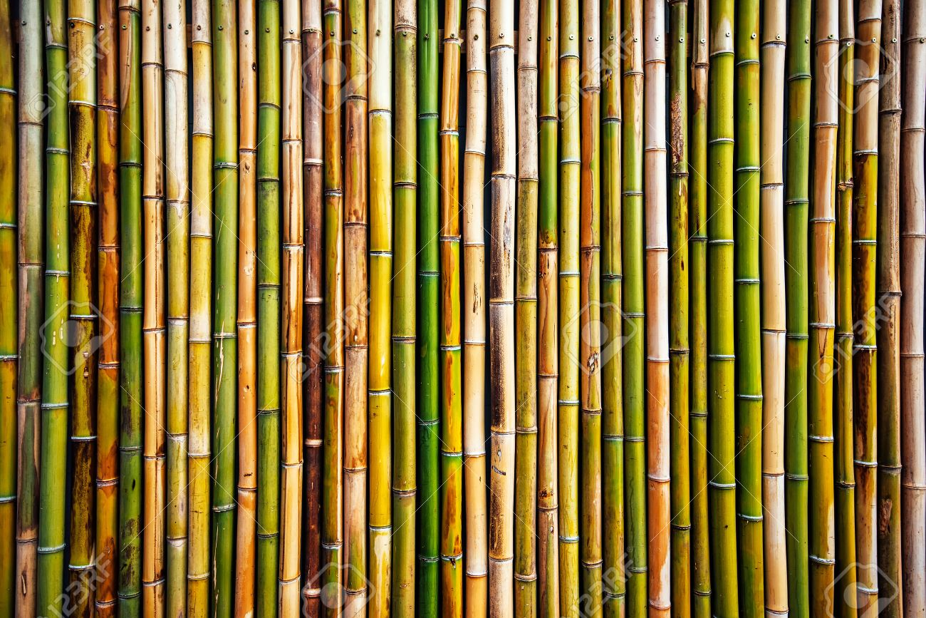 Bamboo wall texture, real natural pattern as background - 73148189