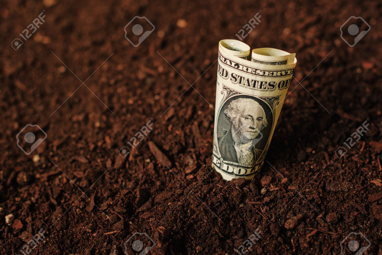 USA dollar banknotes cash money in fertile soil ground, making income in agriculture and agricultural activity like growing crops - 78505478