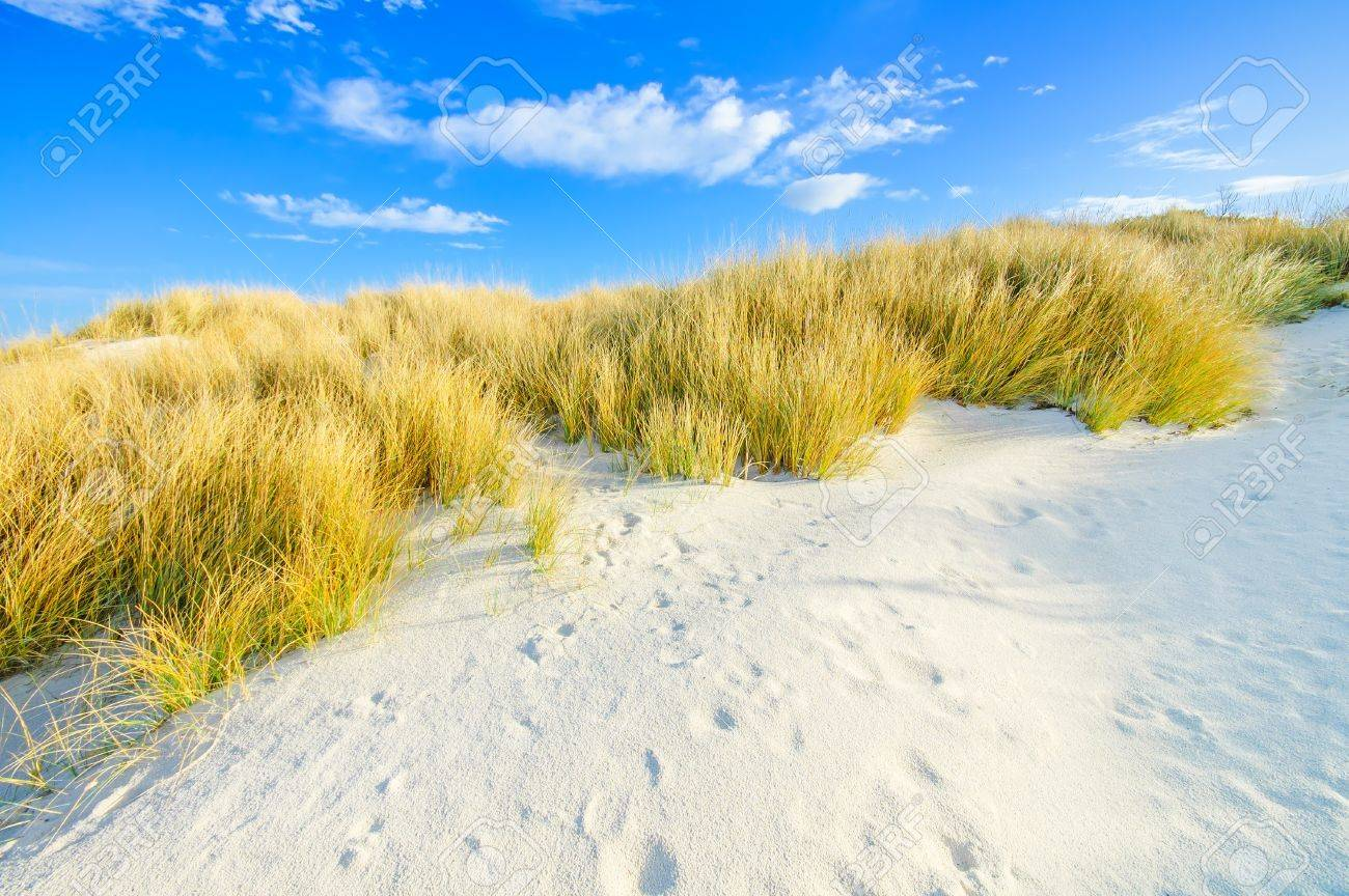 Grass on a white sand dunes beach, and blue sky on background Stock Photo - 17676841