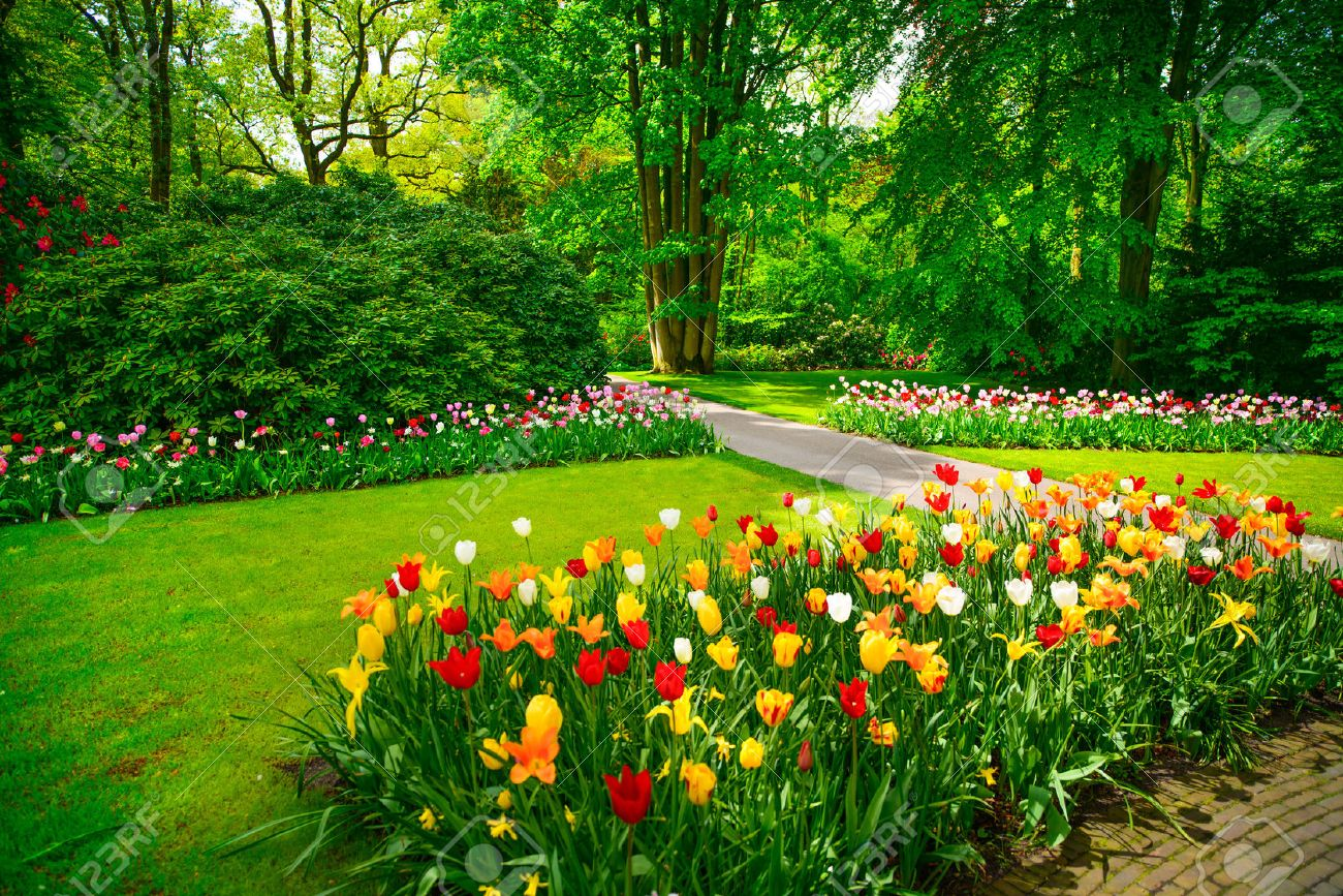 Garden in Keukenhof, tulip flowers and trees on background in..