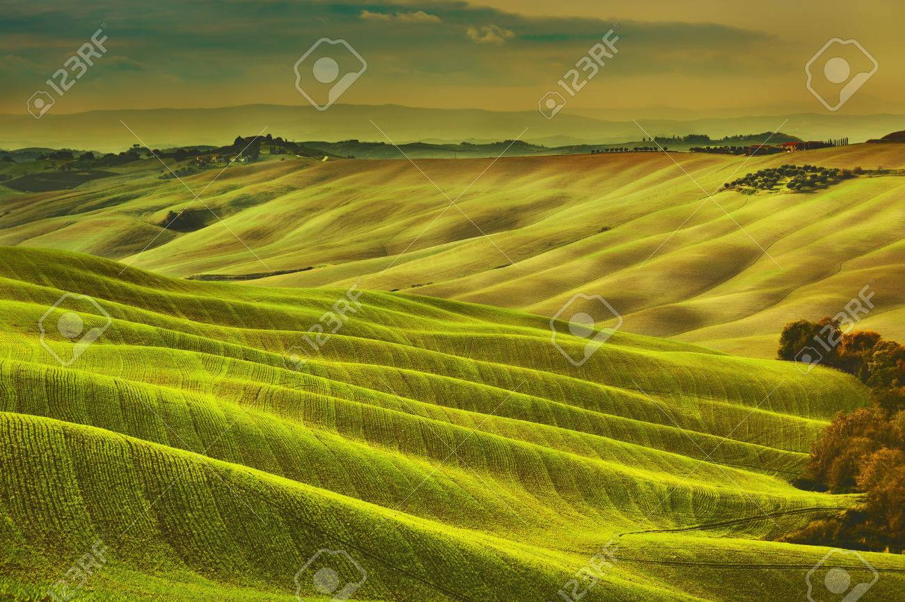 Tuscany spring, rolling hills on misty sunset. Rural landscape. Green fields and farmlands. Italy, Europe - 50207141