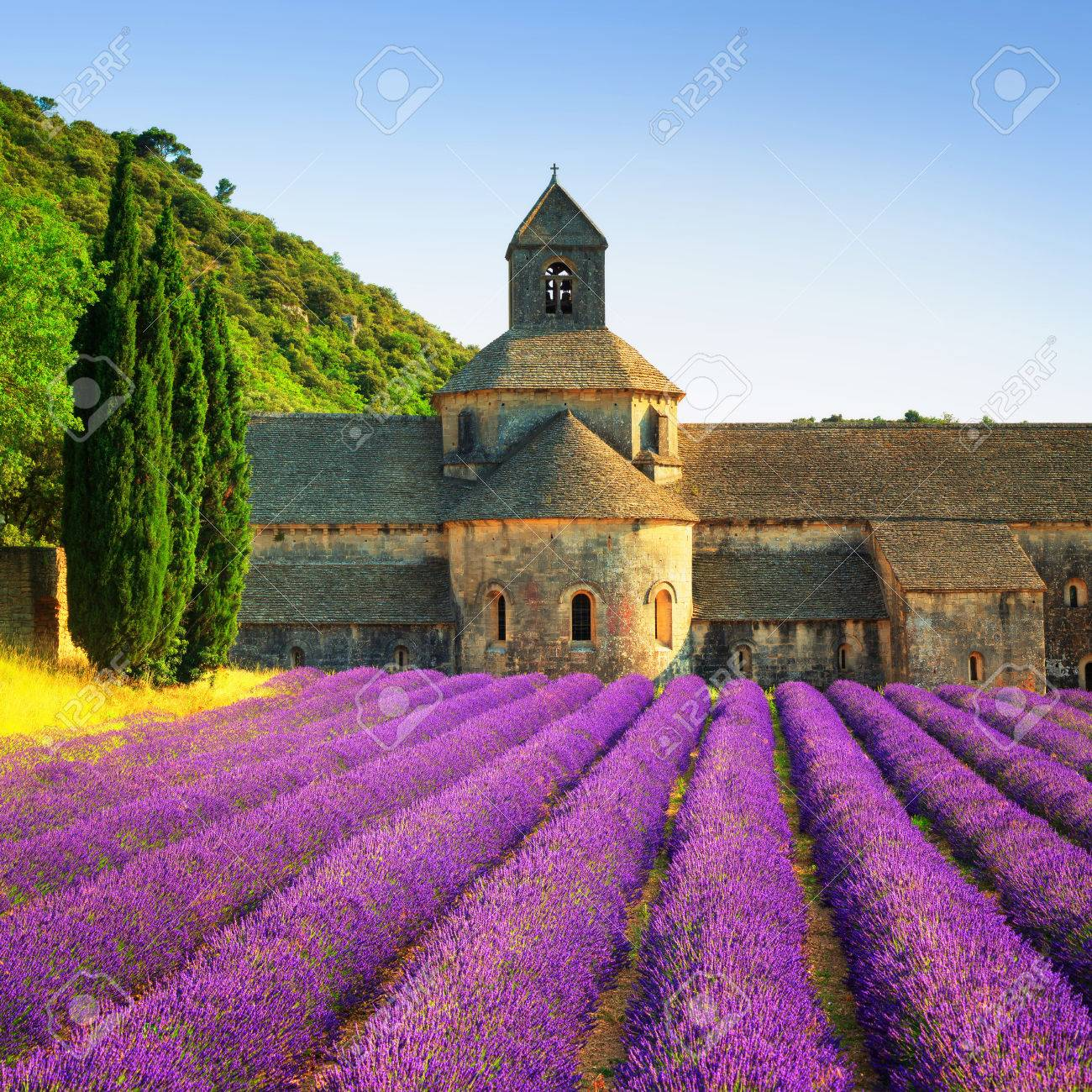 Abbey of Senanque and blooming rows lavender flowers on sunset. Gordes, Luberon, Vaucluse, Provence, France, Europe. - 52013297