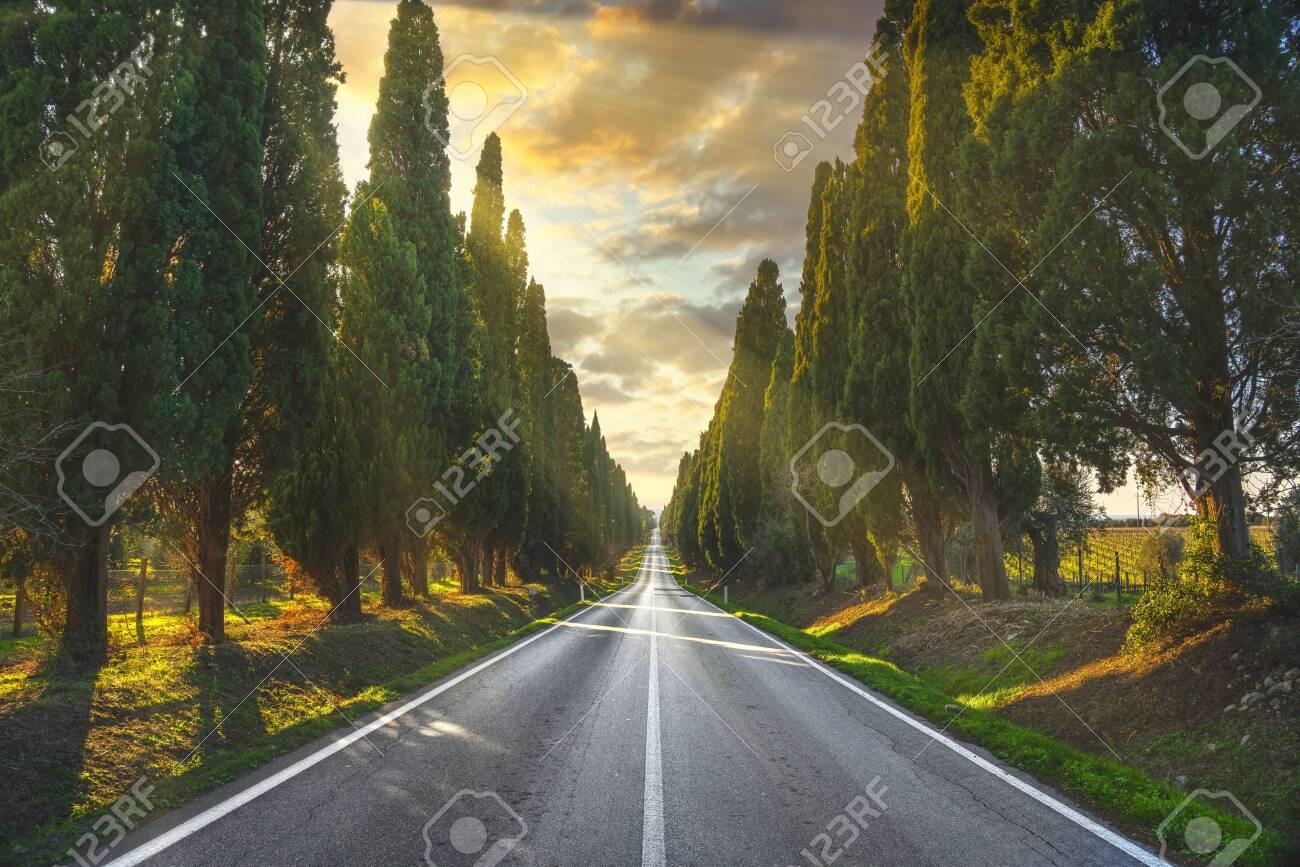 Bolgheri famous cypresses trees straight boulevard landscape at sunset. Maremma landmark, Tuscany, Italy, Europe. - 139085849