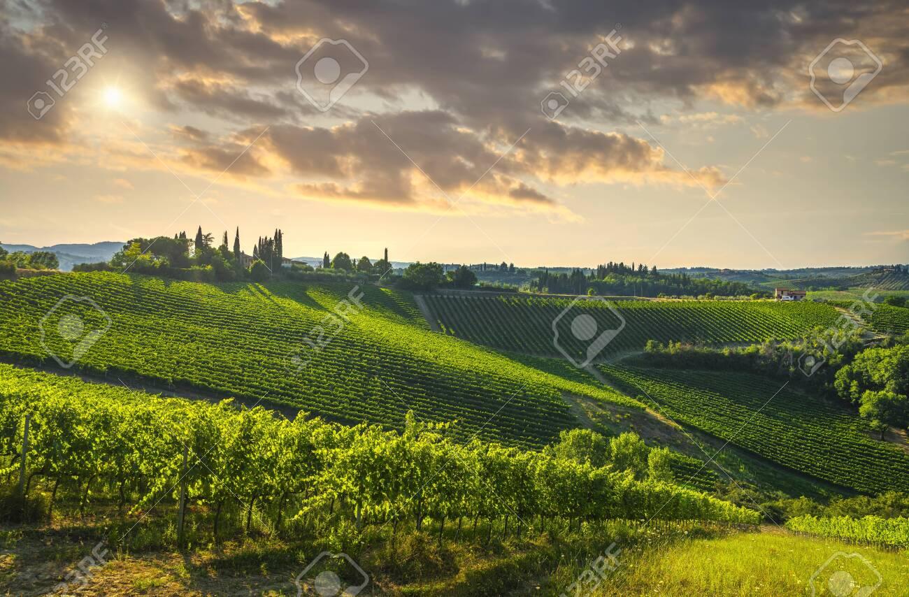 Panoramic view of countryside chianti and vernaccia vineyards. San Gimignano at sunset. Tuscany, Italy, Europe. - 156901304