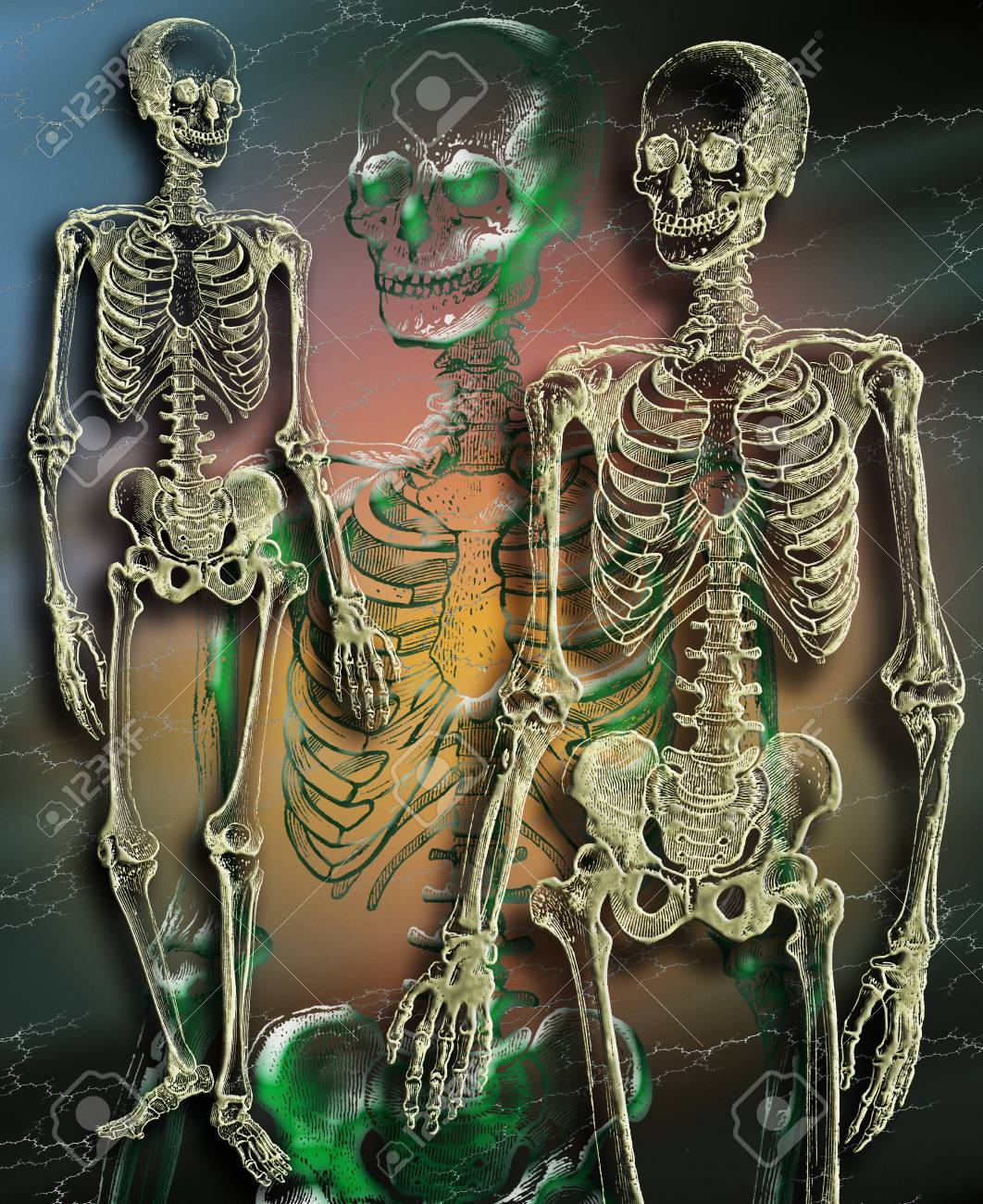 Human Skeleton - Study Of Anatomy Stock Photo, Picture And Royalty ...