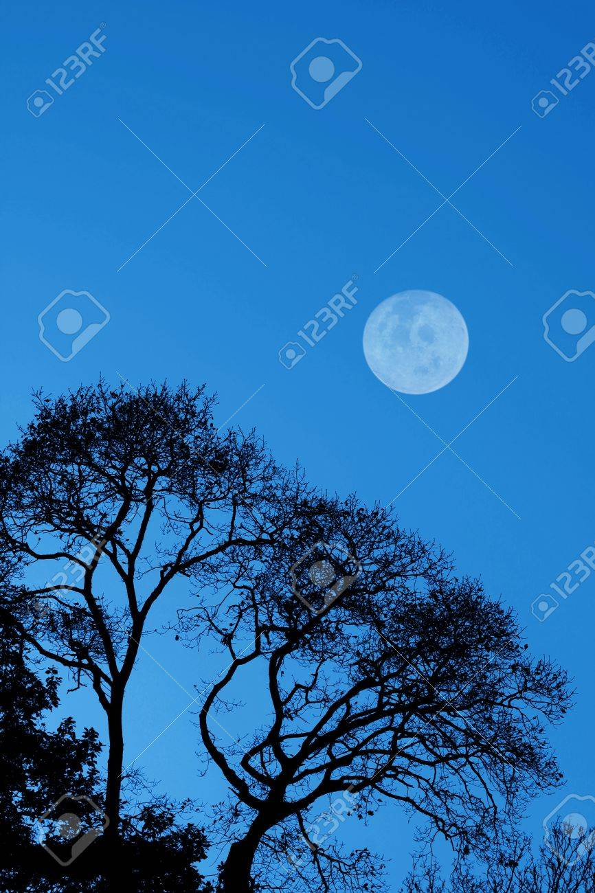 Silhouetted trees and moon against a dark blue sky - 11226517