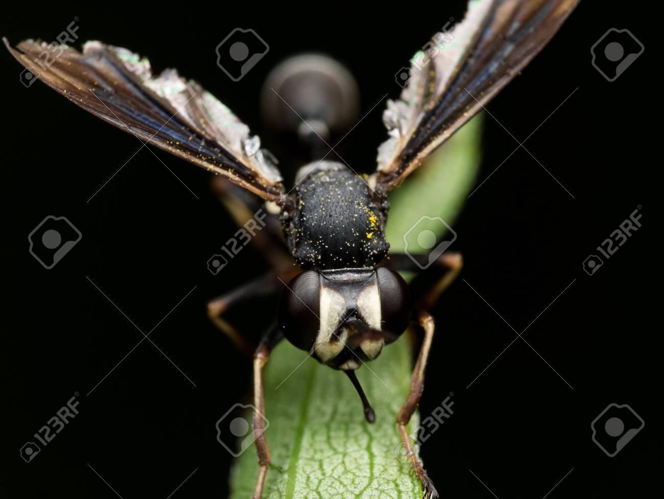 Schwarze Wespe Mit Verletzten Flügel Hände Auf Den Grünen Pflanze