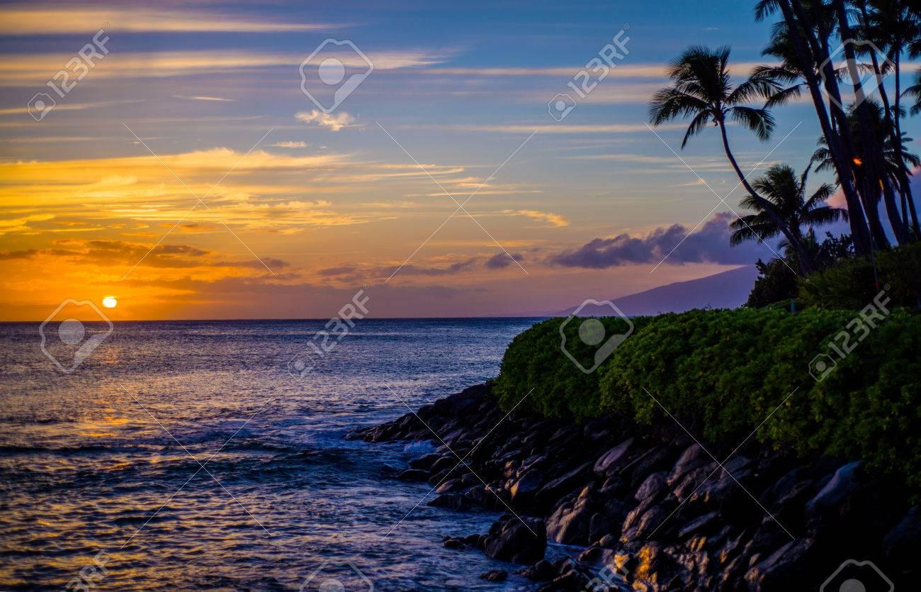 61066c8d19 Coconut Palms Above A Rocky Lava Shoreline At Sunset
