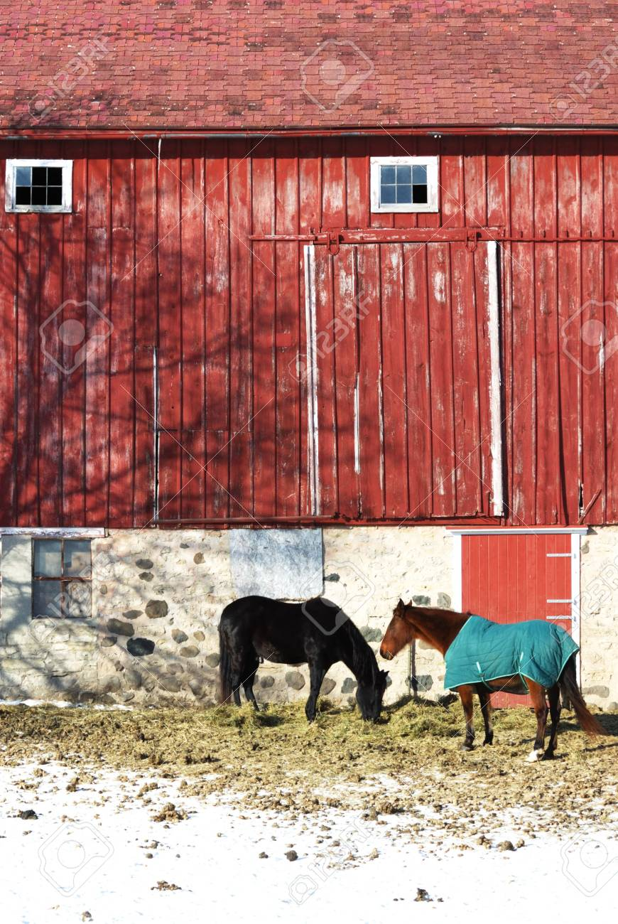Two Horses by Red Barn, Vertical Stock Photo - 4914550