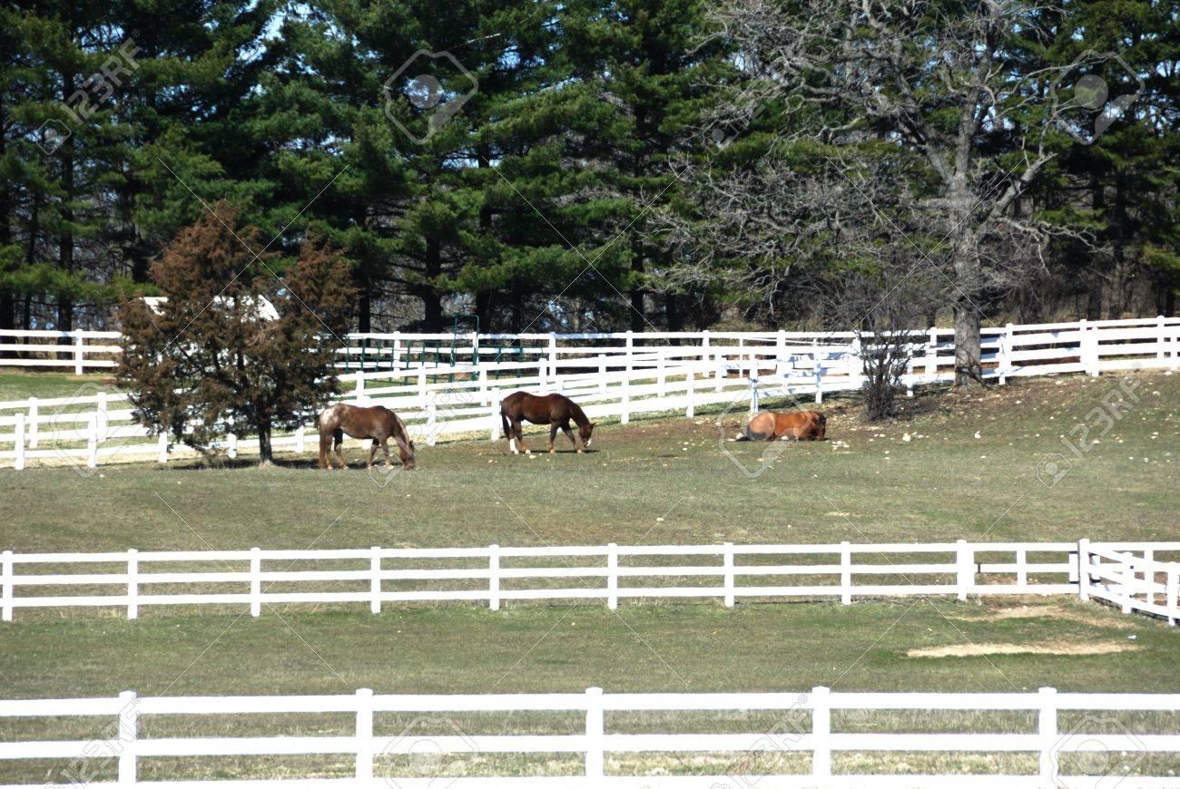 White Fences around Horse Pasture Stock Photo - 4970753