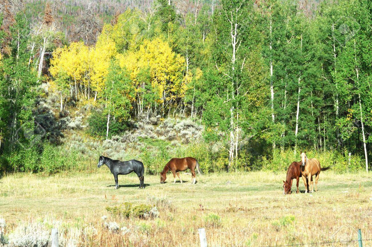 Four Horses in Fall Pasture Stock Photo - 5711839