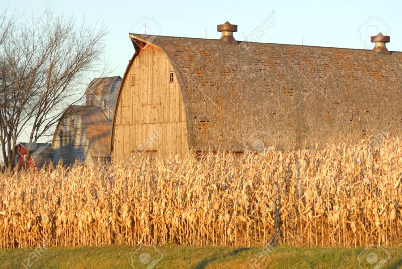 Barn and Cornfield at Sunset Stock Photo - 7193567