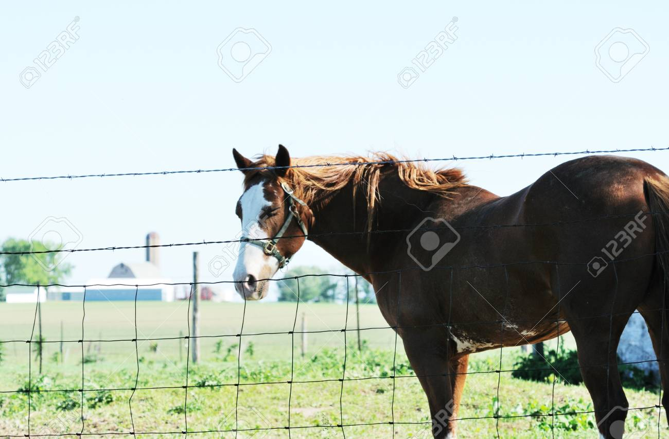Big Brown Horse by Fence Stock Photo - 8785680