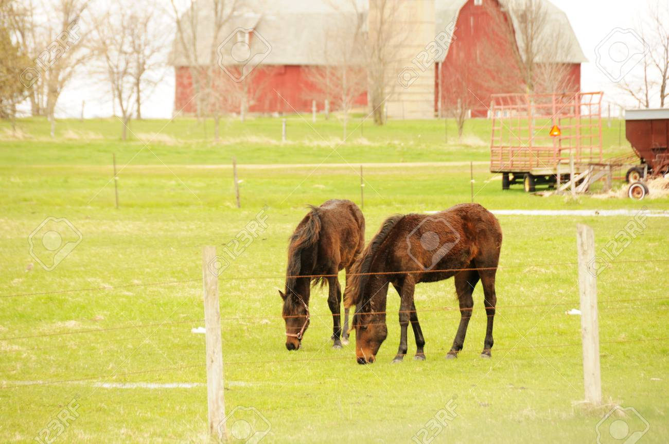 Two Horses Grazing Stock Photo - 13225816