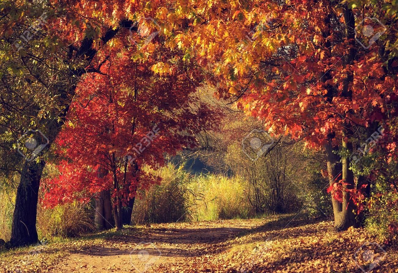 Dirt road in the colorful forest in autumn - 135717708