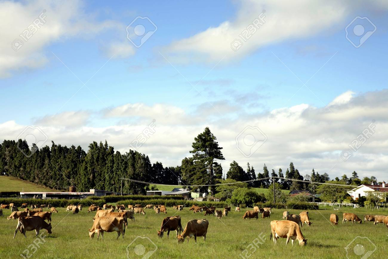 Cow grazing in paddock Stock Photo - 9441900