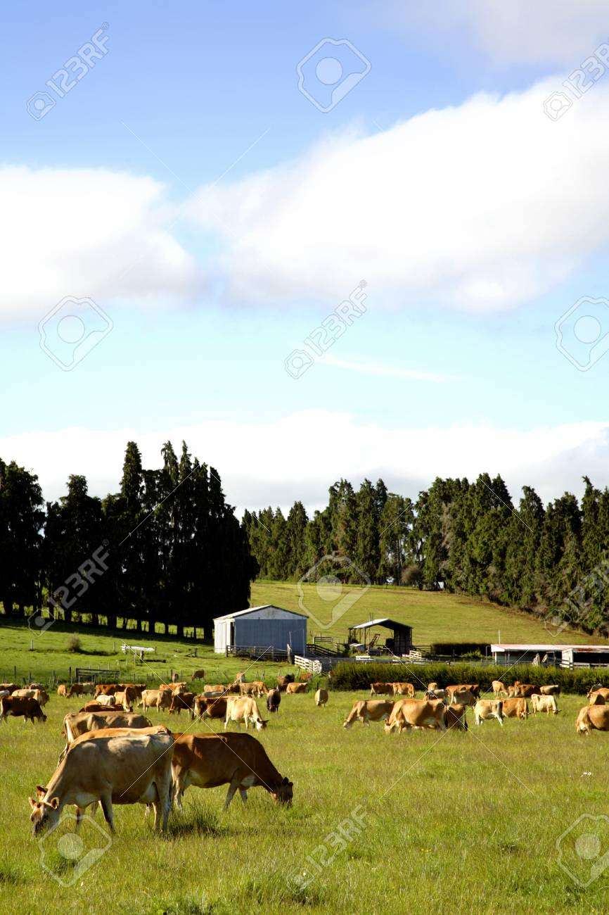 Cow grazing in paddock Stock Photo - 9508098
