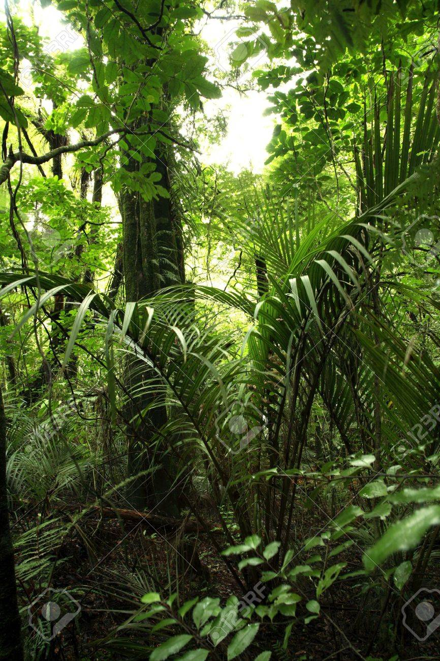 Tropical jungle forest Stock Photo - 9569944