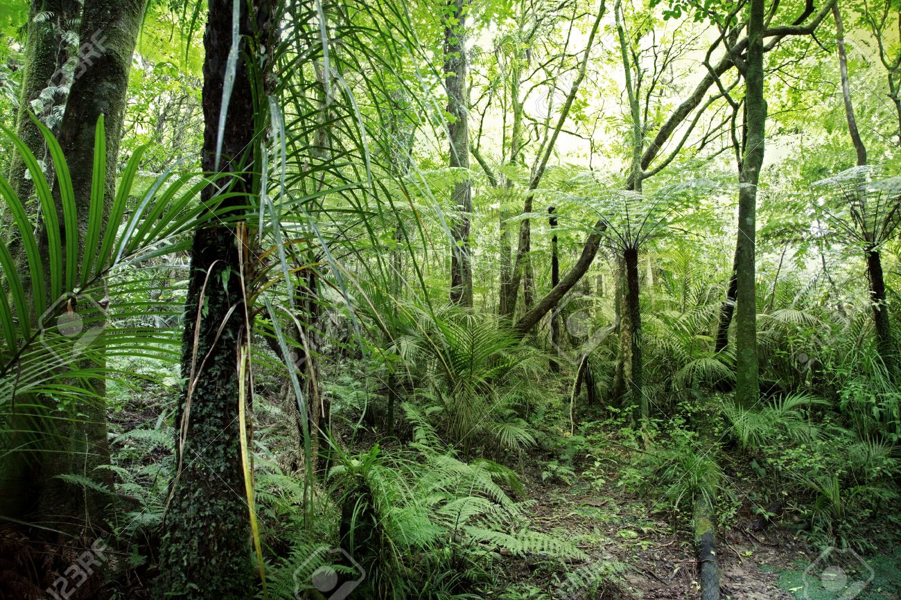 Lush foliage in tropical jungle Stock Photo - 10671444