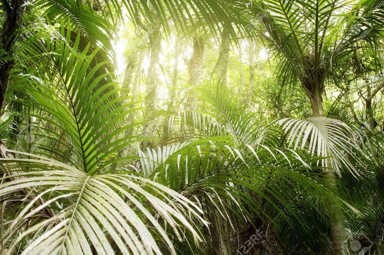 Lush green foliage in tropical jungle - 59796457