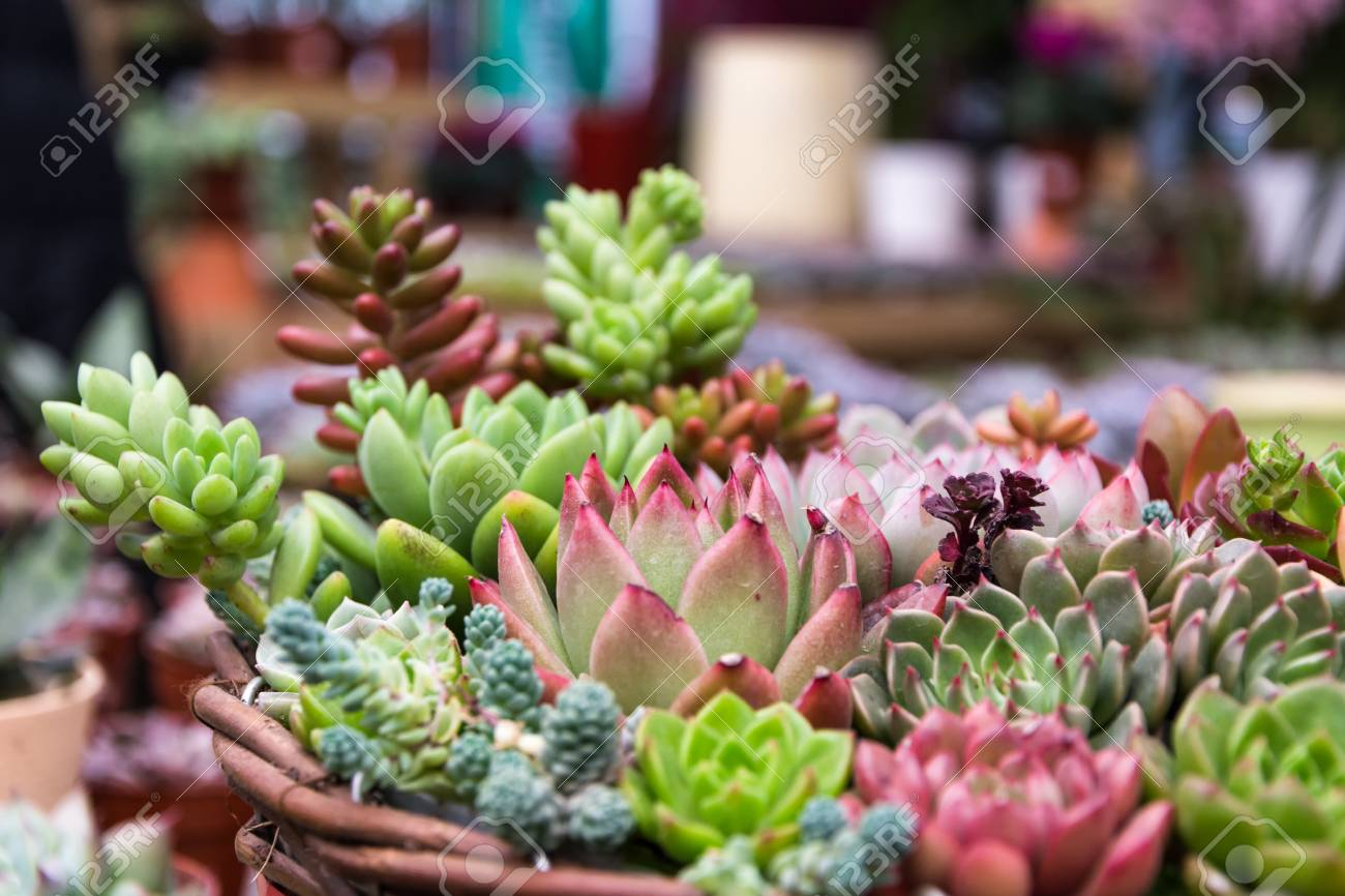 Rectangular Arrangement Of Succulents Cactus Succulents In A Stock Photo Picture And Royalty Free Image Image 72017140