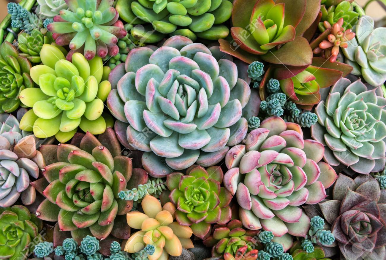 Rectangular Arrangement Of Succulents Cactus Succulents In A Stock Photo Picture And Royalty Free Image Image 72017141