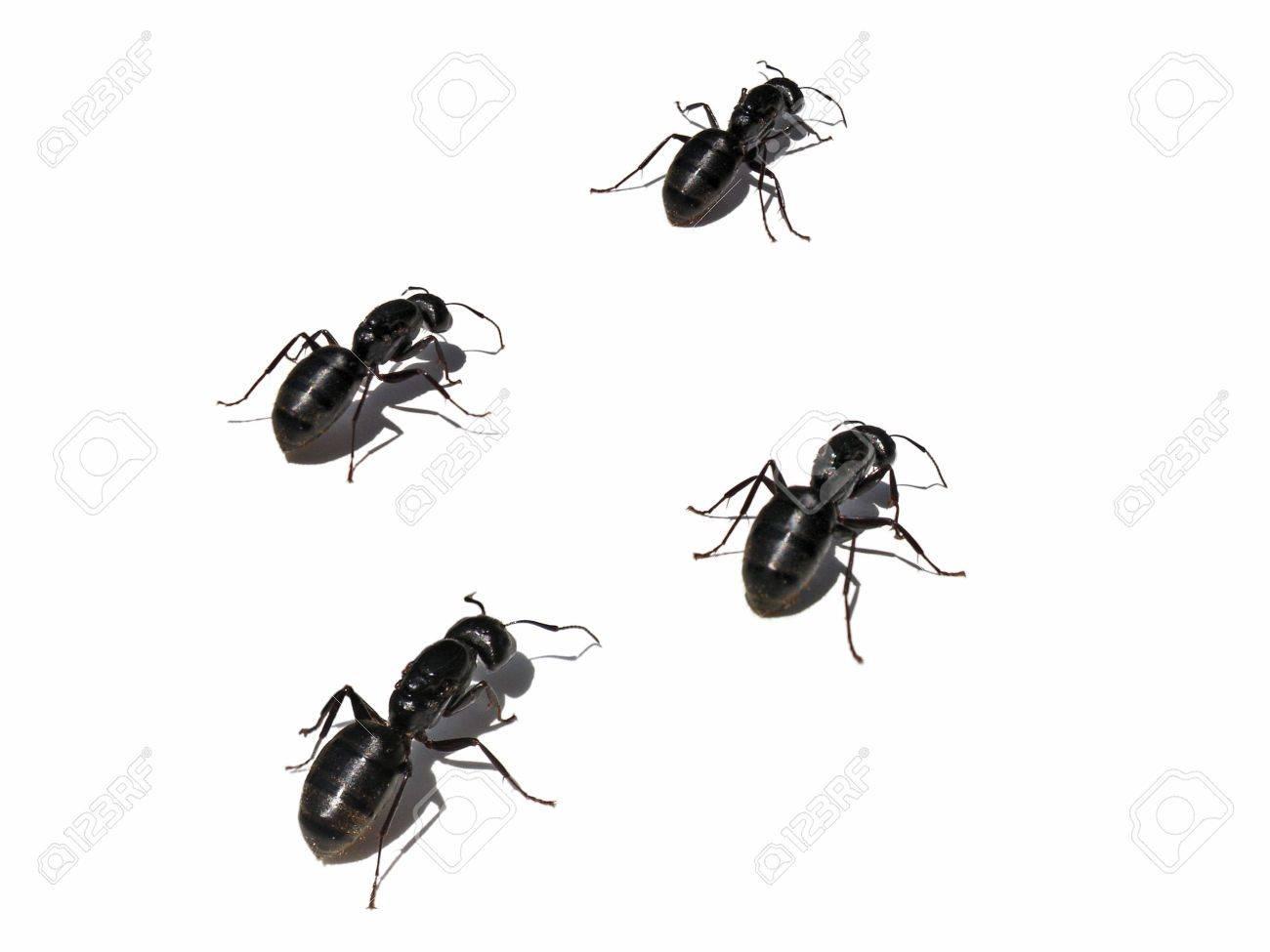 Ants Crawling Stock Photo - 3657547