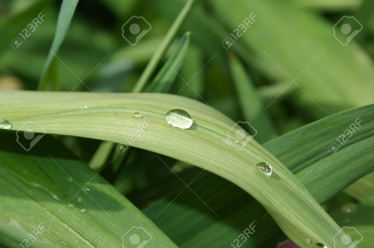 View of a water drop on the leaf of a plant. Stock Photo - 8605033