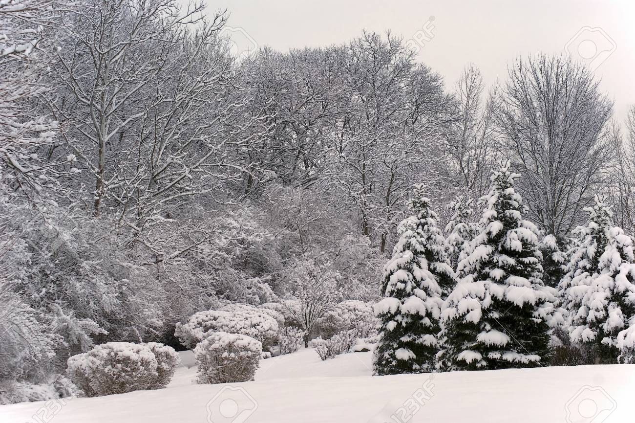 View of a winter scenic landscape with snow covered trees. Stock Photo - 44584132