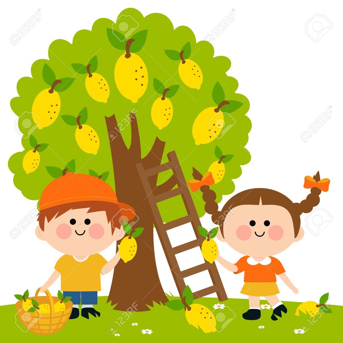 Kids harvesting lemons. - 53050691