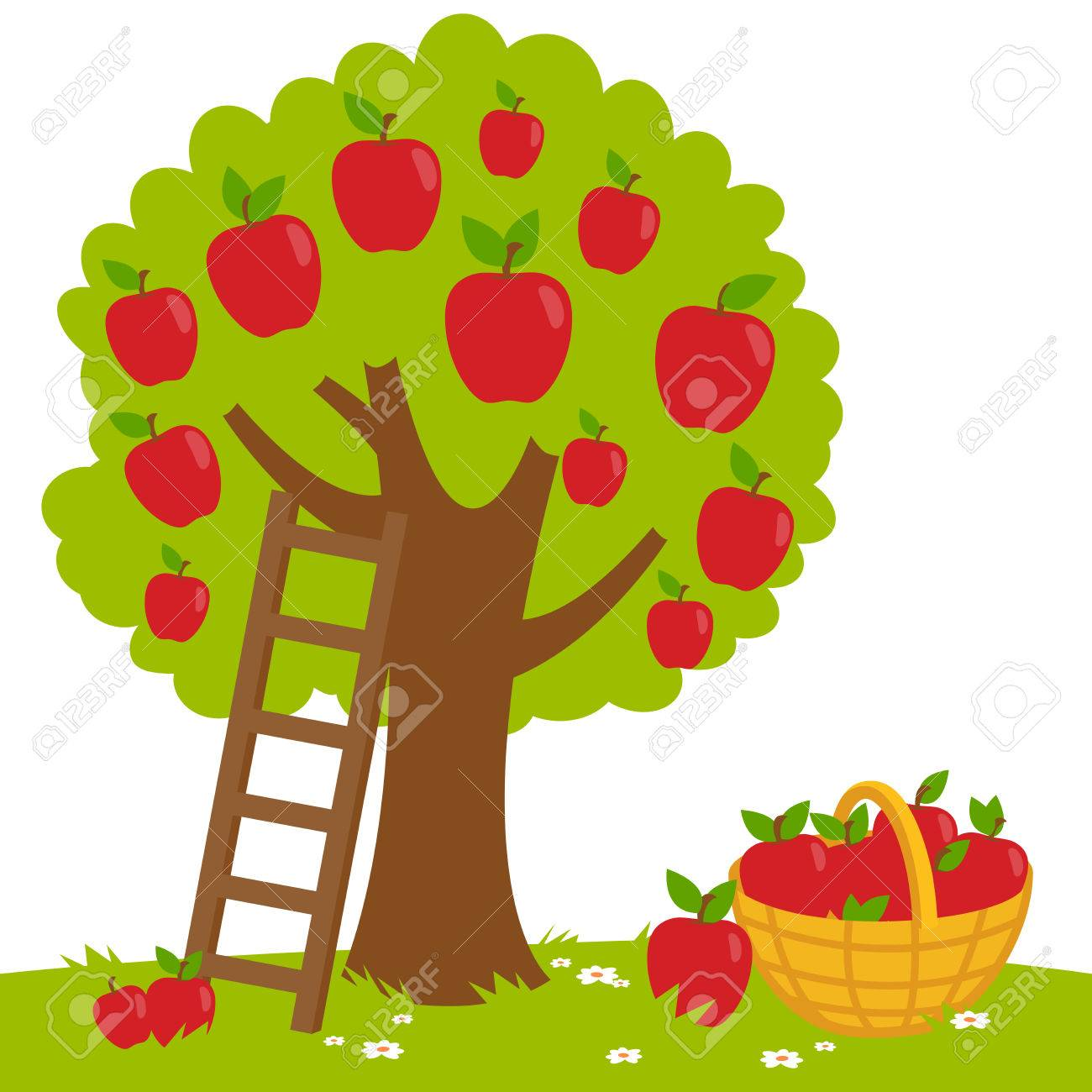 An apple tree, a ladder and a basket with harvested apples. - 62129045