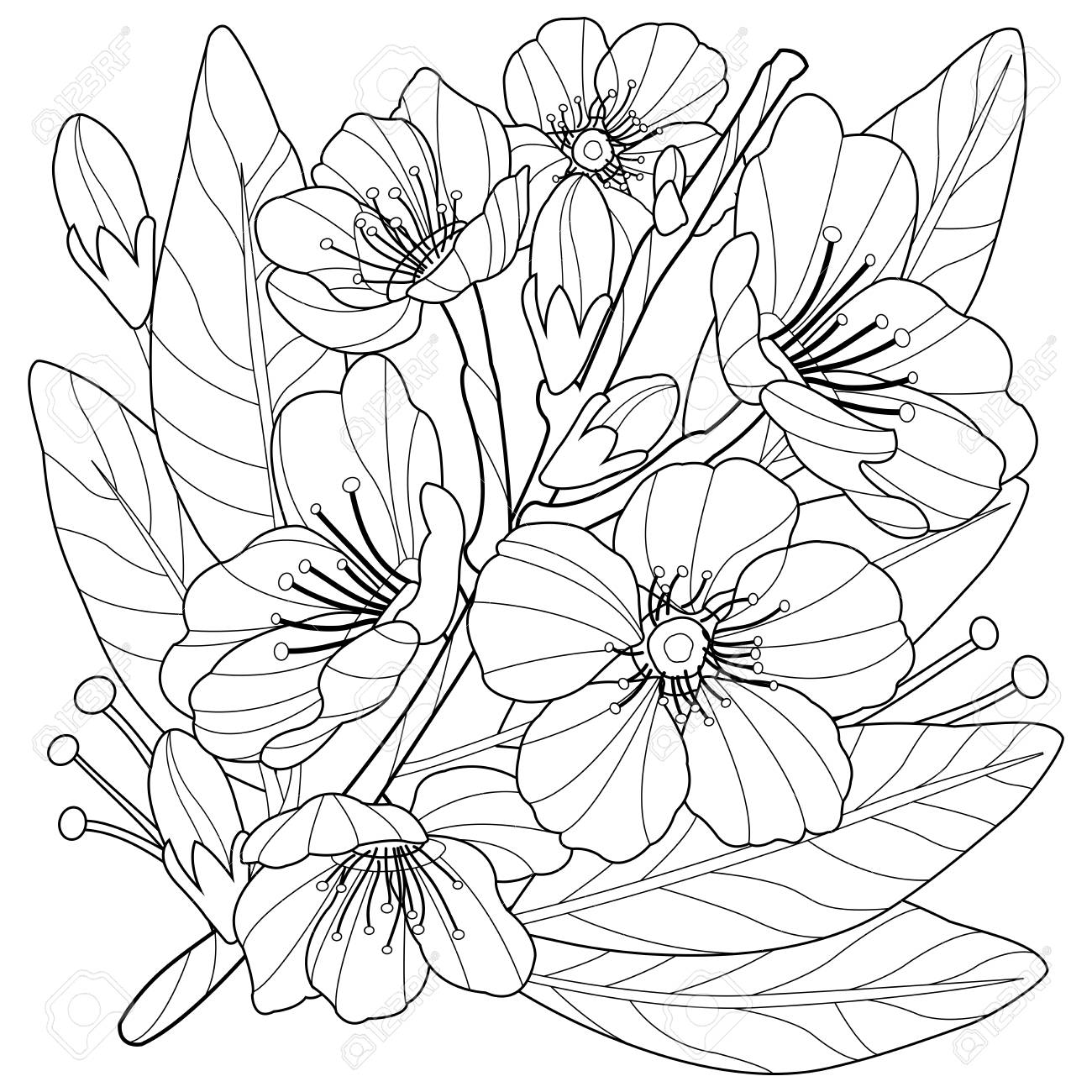 - Blossoming Almond Tree Branch With Flowers. Coloring Book Page