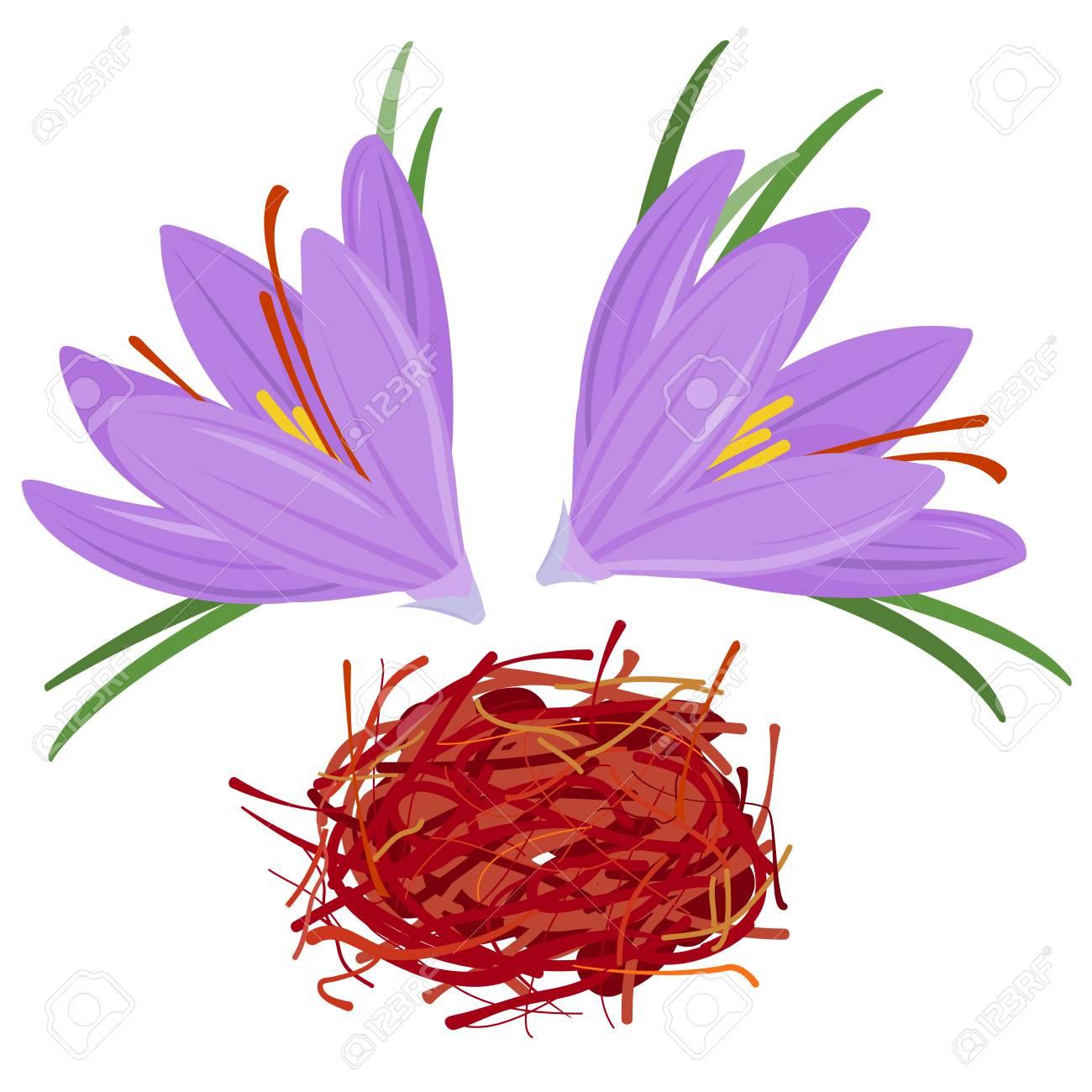 Flower Crocus And Dried Saffron Spice Crocus Sativus Royalty Free