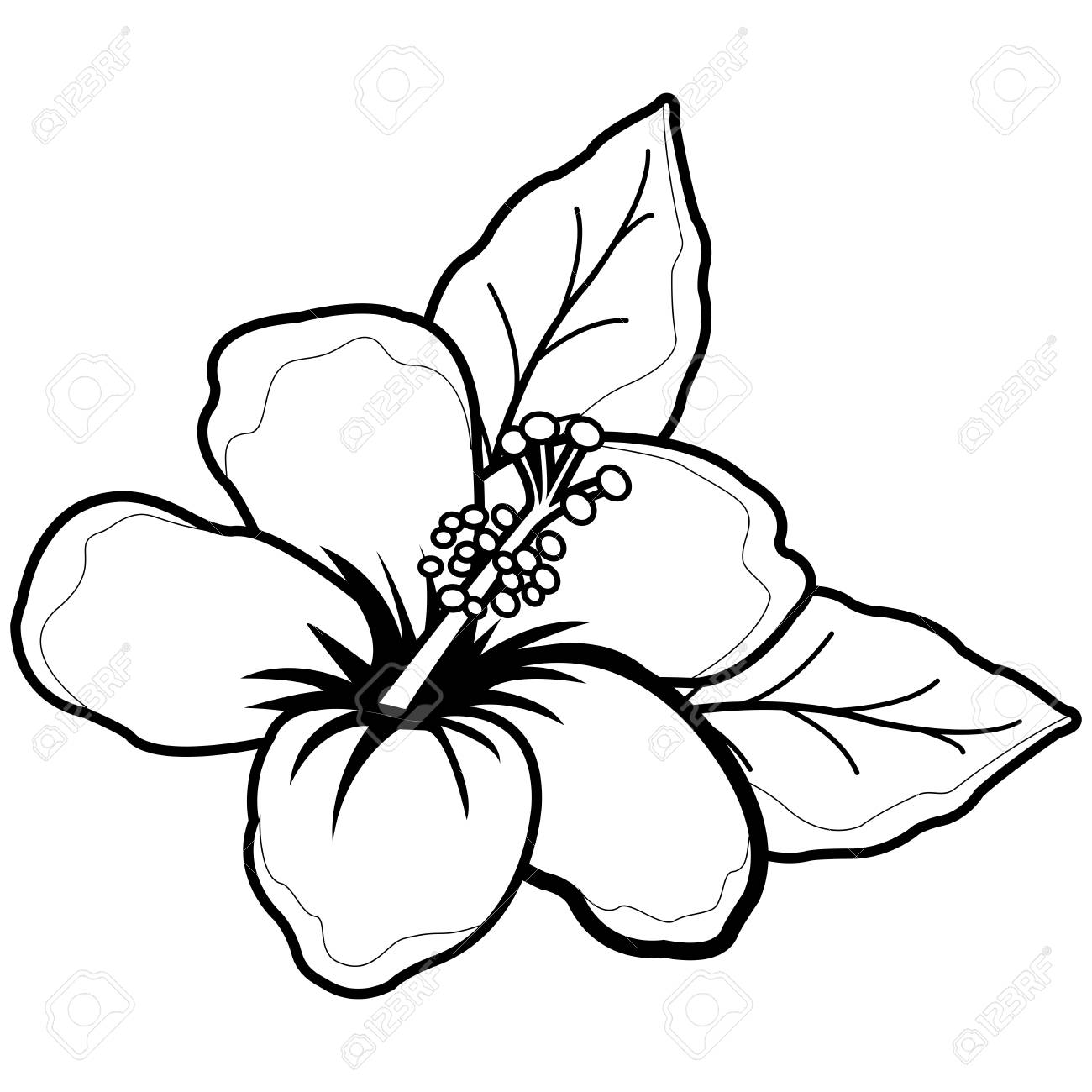 Hawaiian Hibiscus Flower Black And White Coloring Book Page Royalty