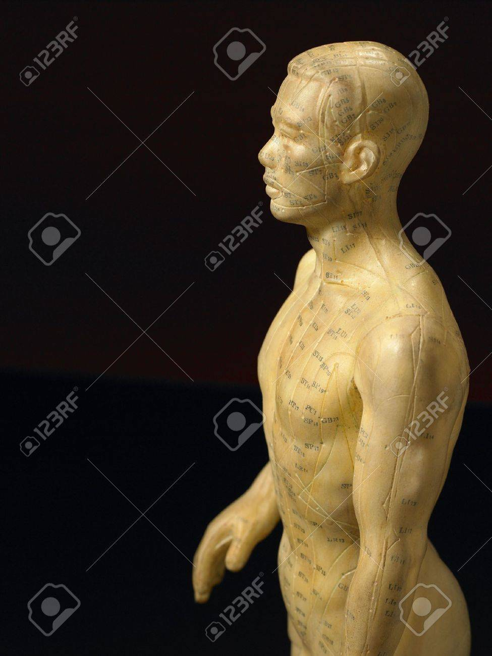 Meridian Lines On An Acupuncture Figurine Stock Photo - 4638875