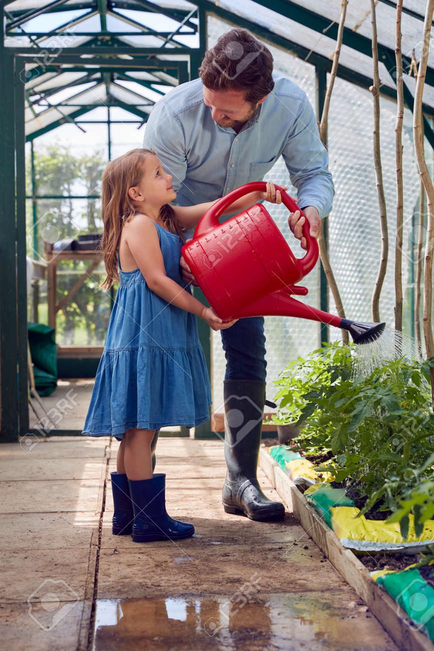 Daughter Helping Father To Water Tomato Plants In Greenhouse At Home - 172365024