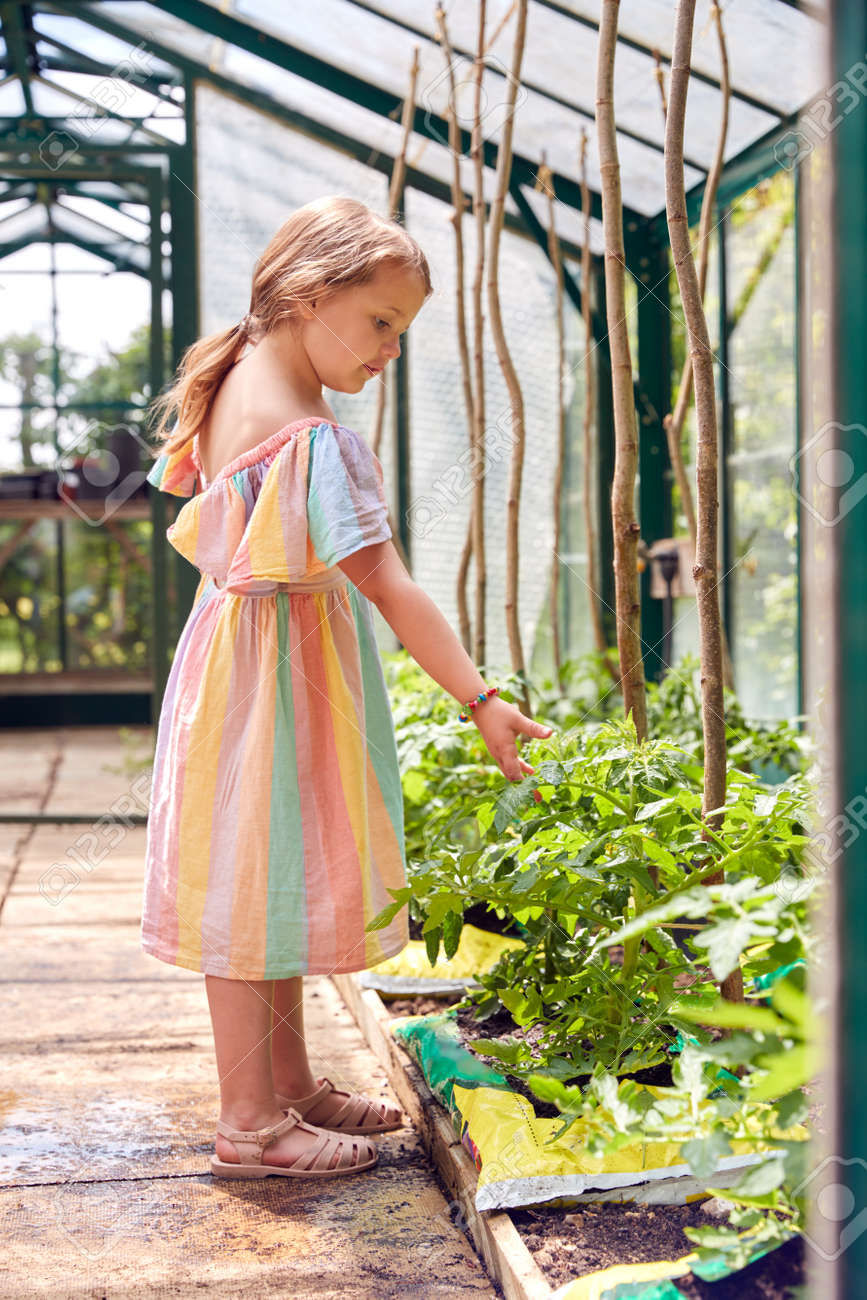 Young Girl Looking At Tomato Plants In Greenhouse At Home - 172365339