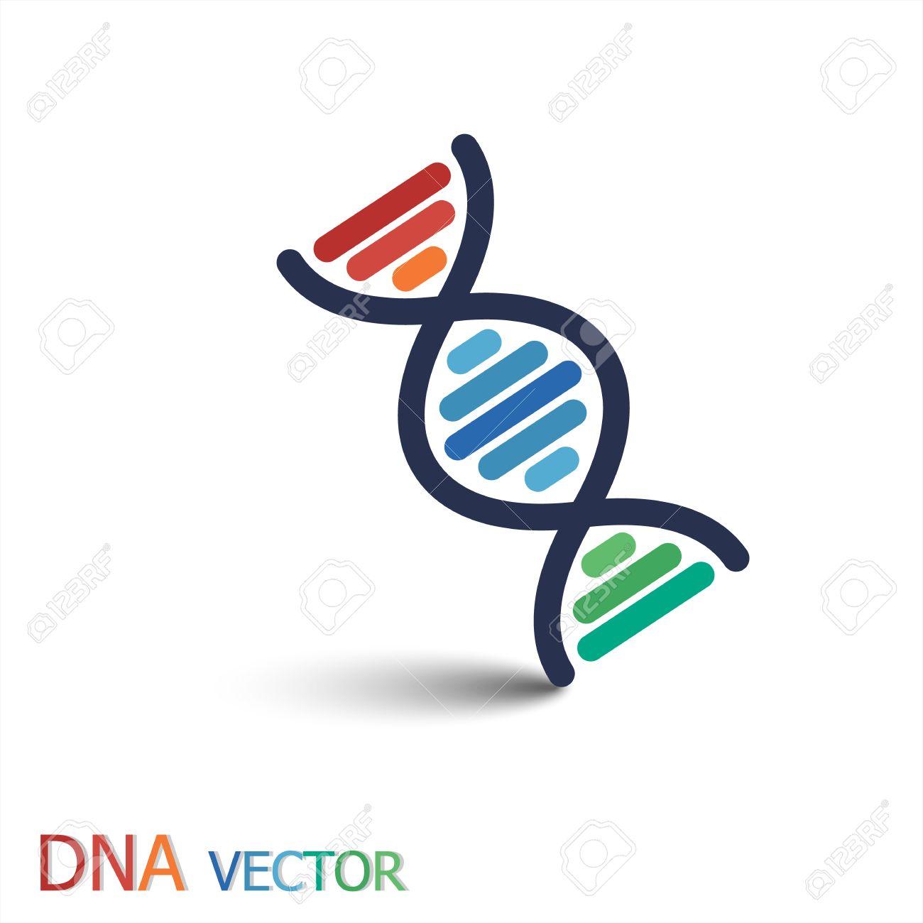DNA (デオキシリボ核酸) シン...
