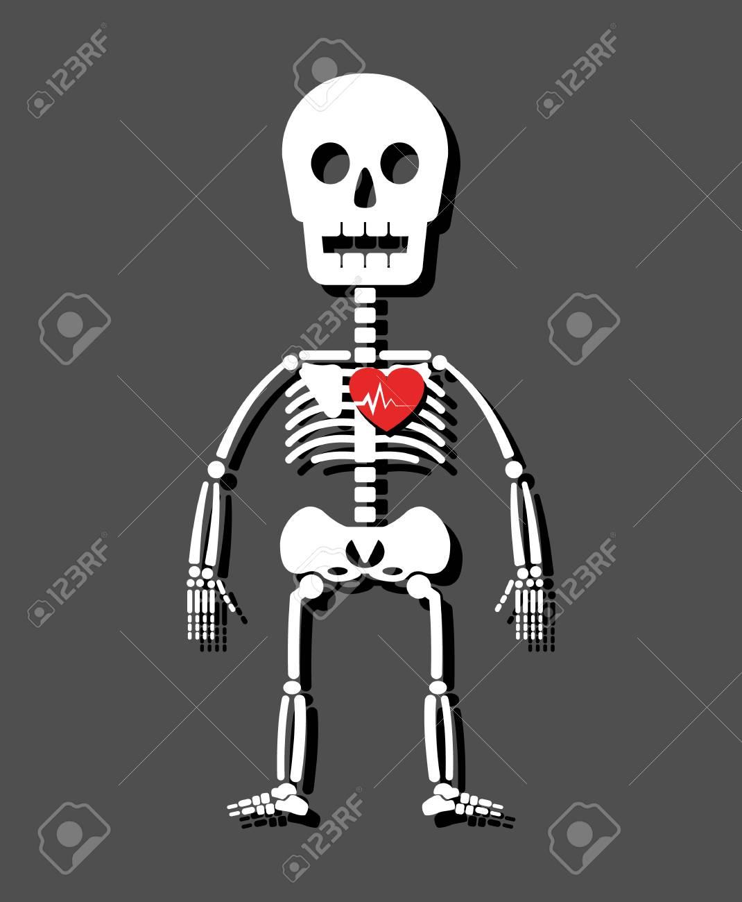 Human skeleton and heart . Cartoon style . - 80716140