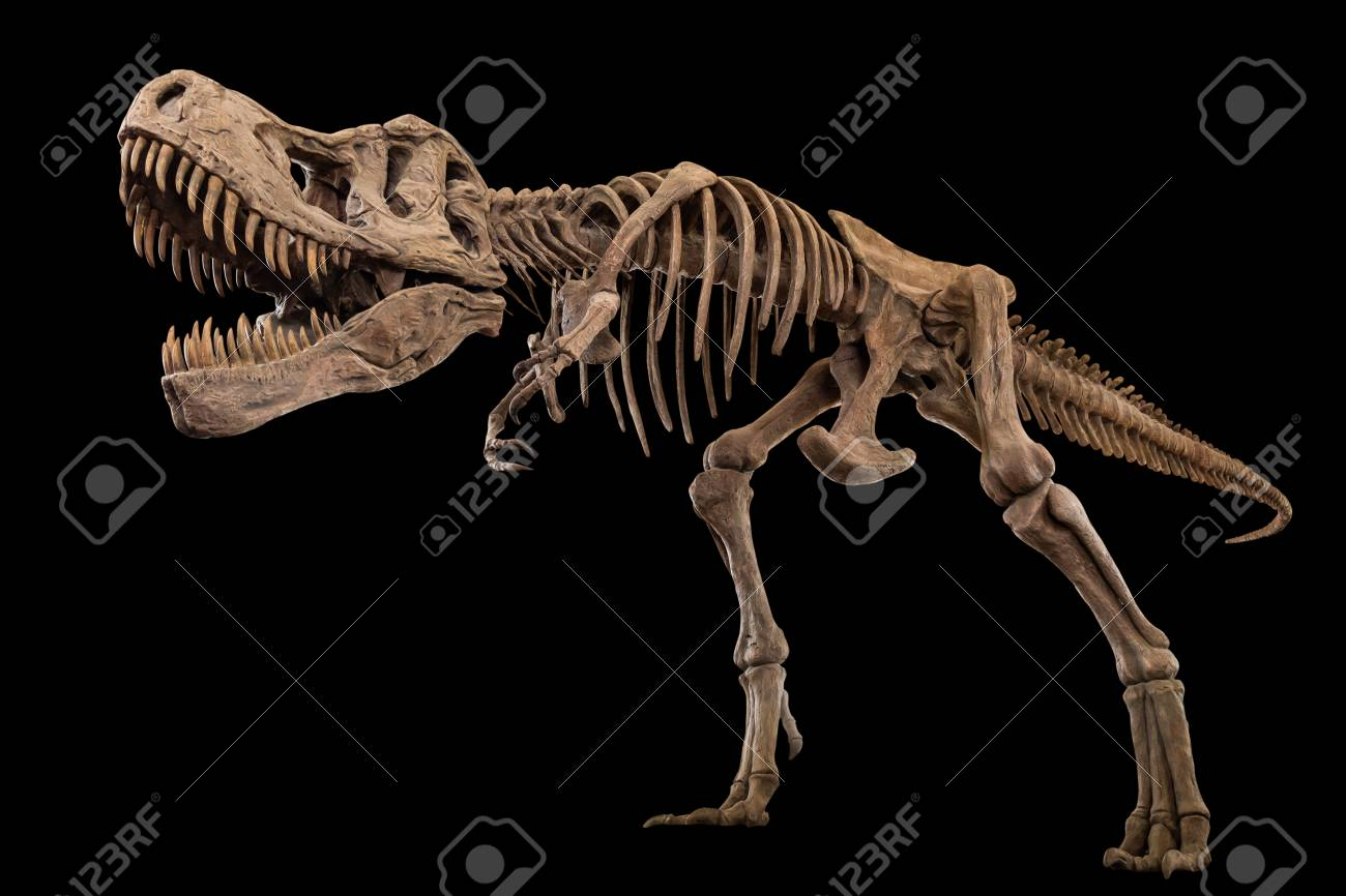 Tyrannosaurus Rex skeleton on isolated background . Embedded clipping paths . - 121198342