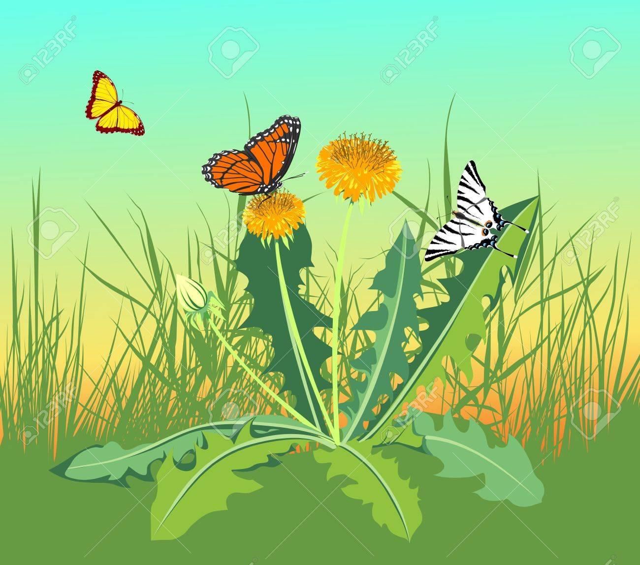 three butterflies flying in a field near the dandelions Stock Vector - 13921285