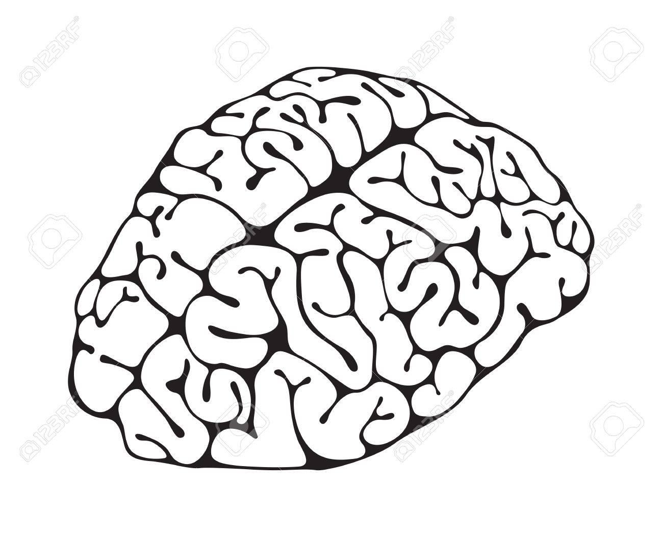 Figure brain closeup on white background Stock Vector - 13920395