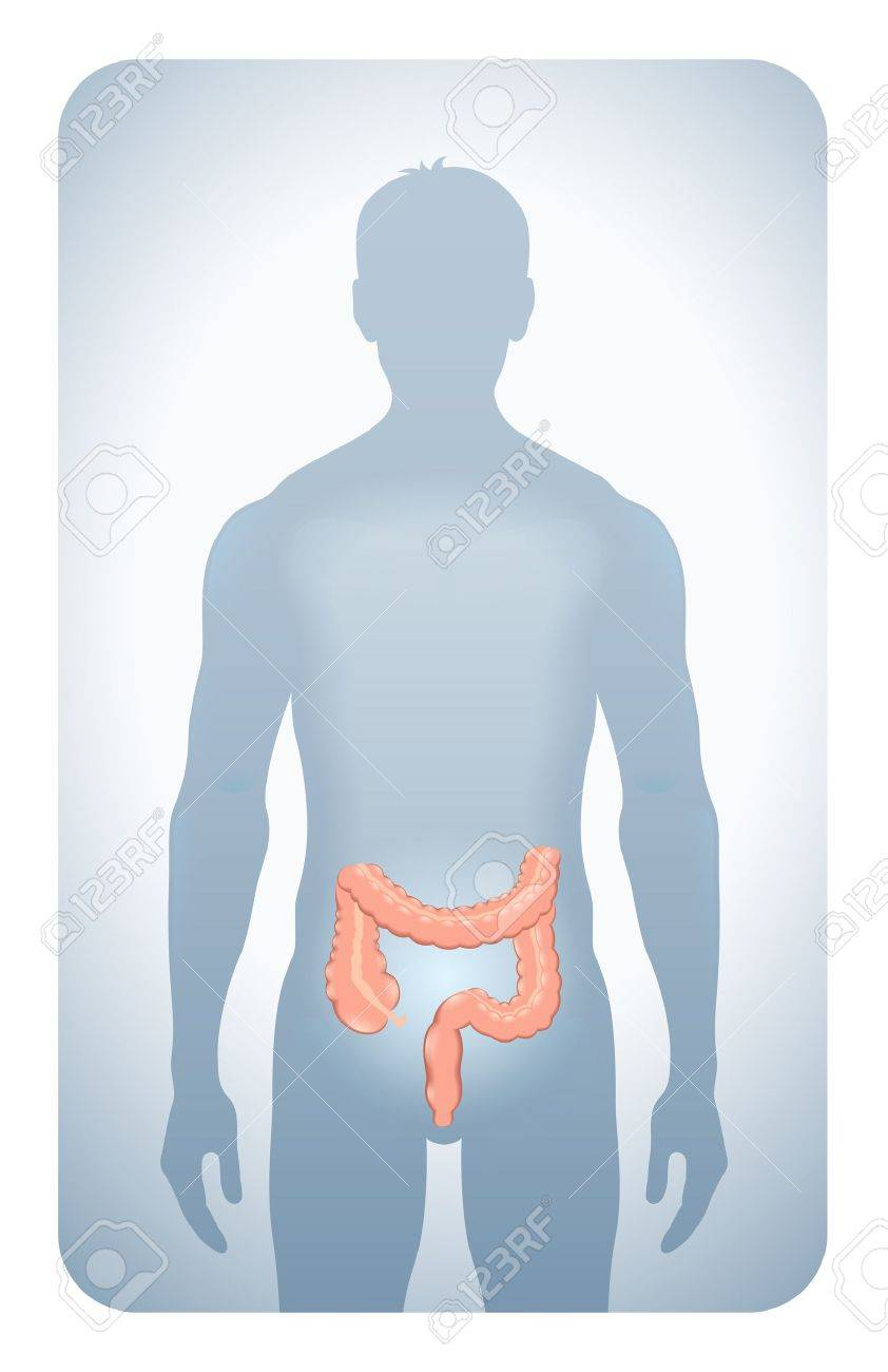colon highlighted on the silhouette of a man Stock Vector - 13920349