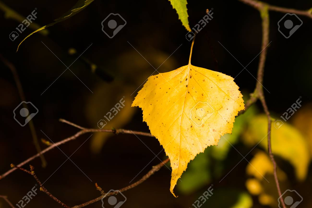 Autumn Leaves Stock Photo - 22917037