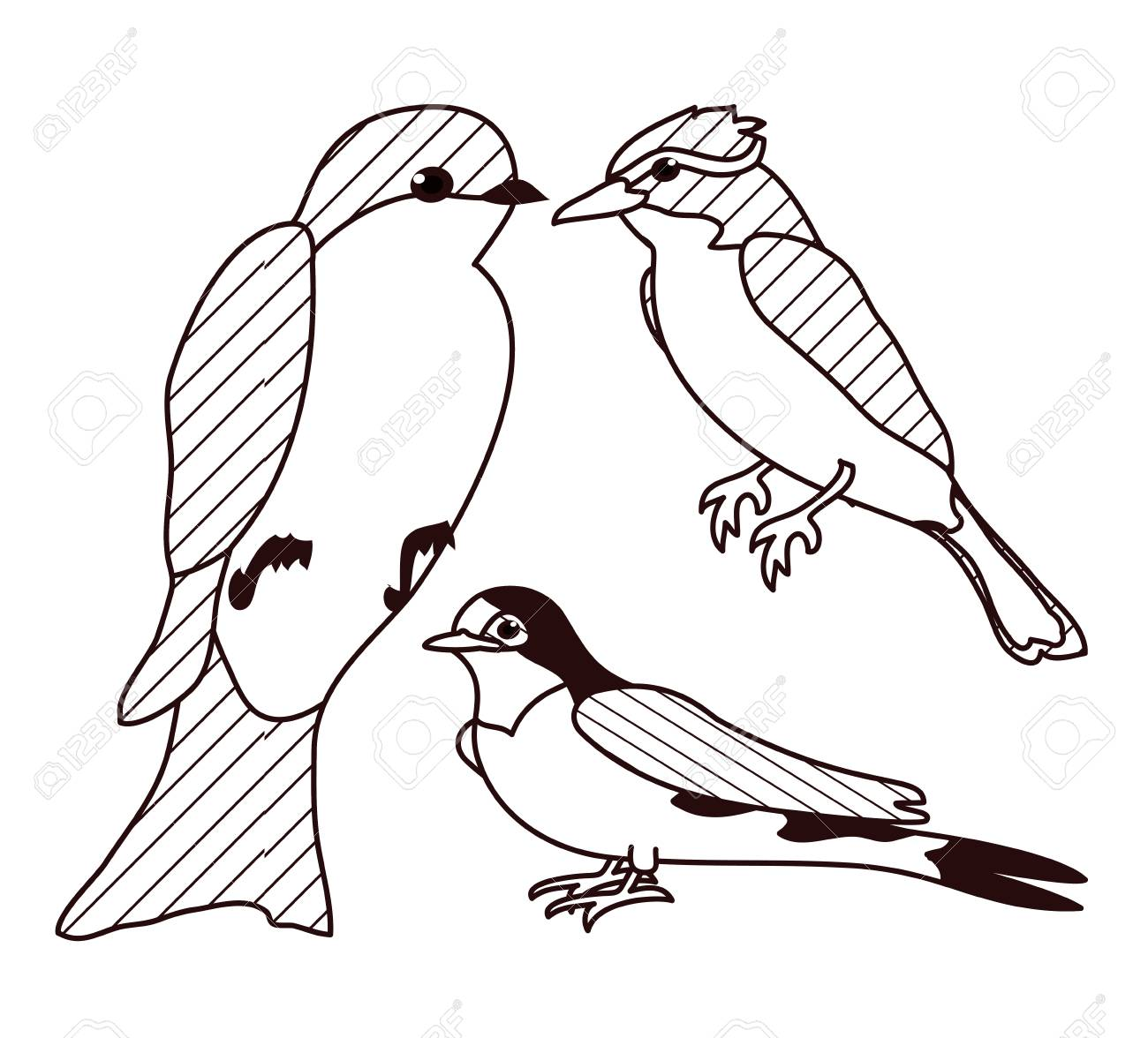 Beautiful birds drawings on black and white vector illustration graphic design stock vector 96904244