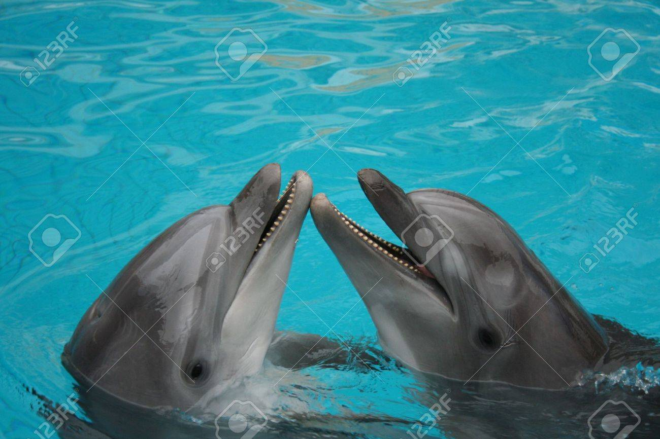 funny bottle nosed dolphins dancing in the water Stock Photo - 624765