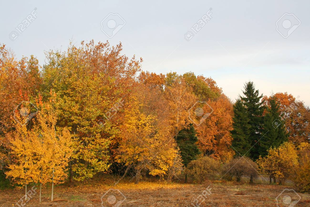 Forest at the autumn. Vivid colors Stock Photo - 2412419