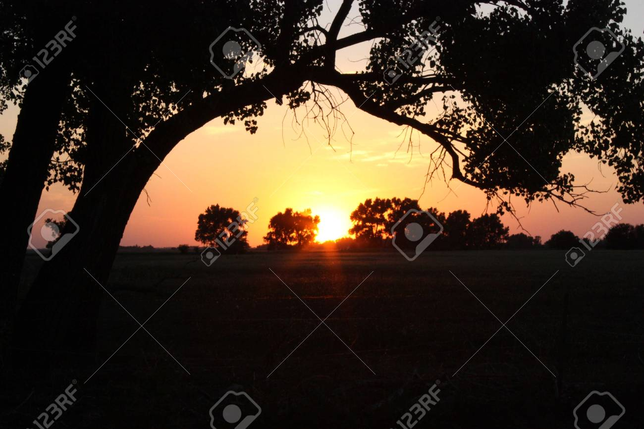 A sunset with trees and a tree limb. Stock Photo - 5135476