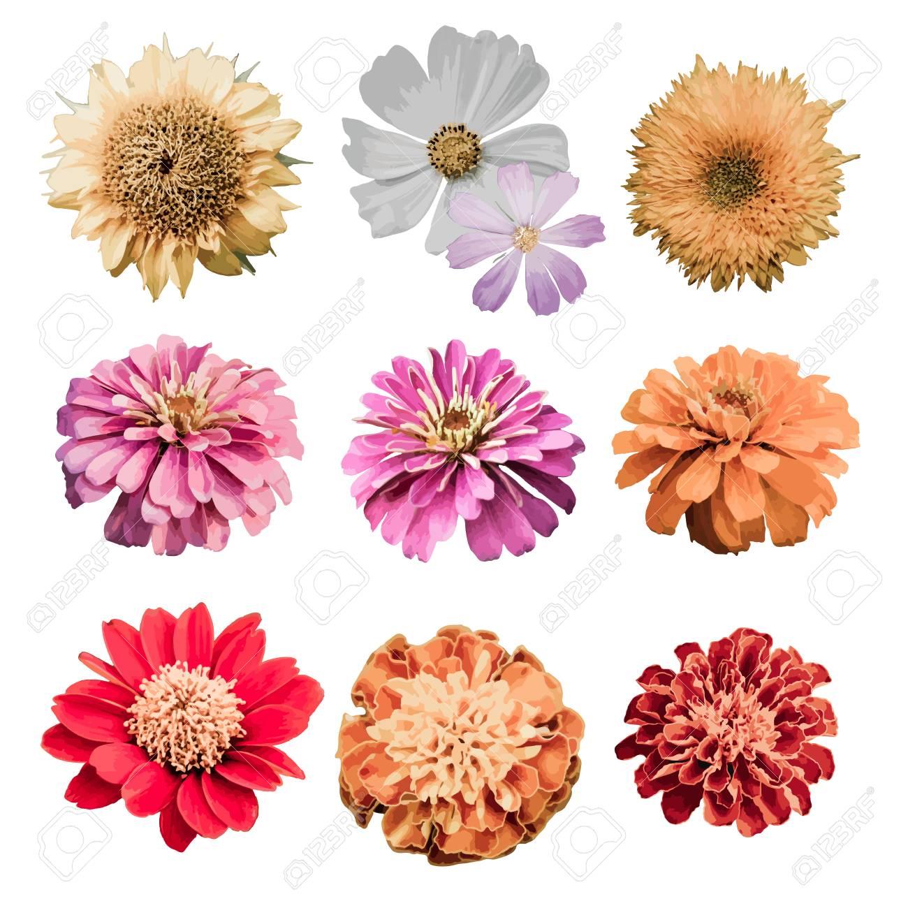 Vector floral design element set - 120150851